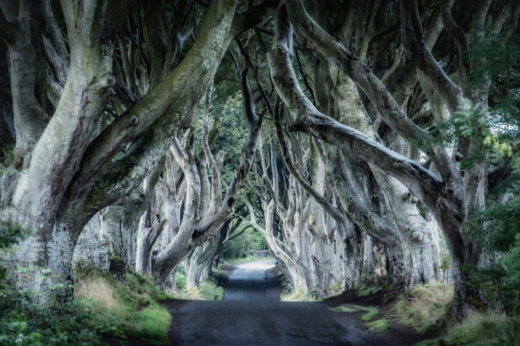 GoT Kings Road - Dark Hedges